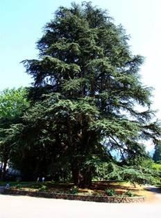 Sortie arbres remarquables