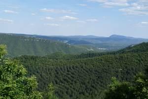 Re-Gard sur la forêt des Cévennes à Alzon