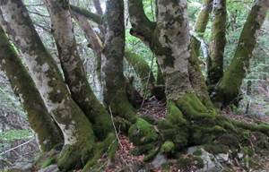 Quel est cet arbre