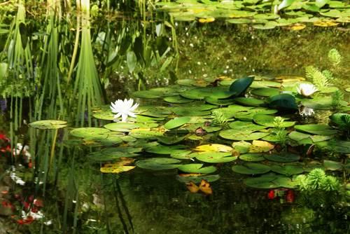 Jardins de la Fontaine - Bassin