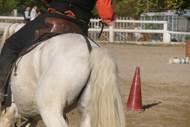 Ecole d'équitation Tour Magno Gardiano