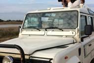 Safari Camargue Découverte