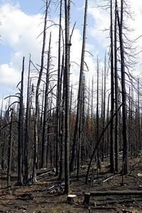 La biodiversité après le feu