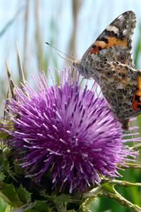 A la découverte des Insectes pollinisateurs