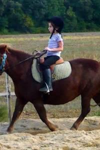 Les poneys du Fesq