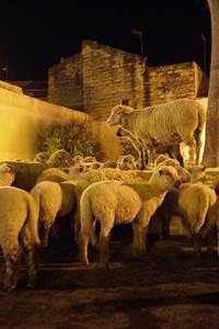 Noël d'Antan à Aimargues