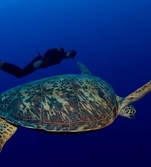 Blue Caledonia Freediving