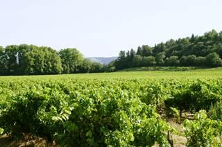 Les crus des Côtes du Rhône