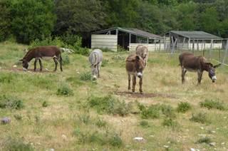Causse Et Lamas