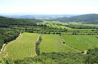 Les Côtes du Rhône (AOP)