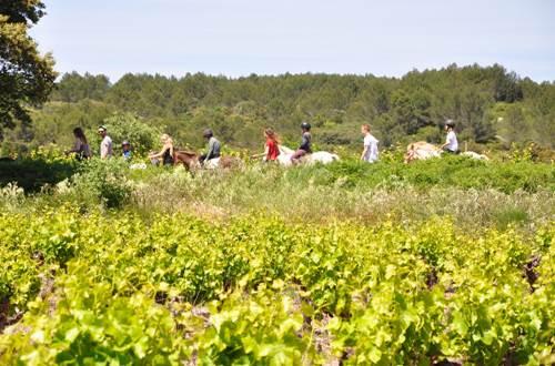Domaine de l'Aqueduc balade dans les vignes © Domaine de l'Aqueduc
