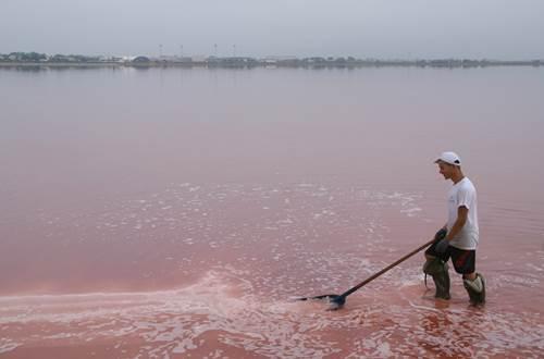 Salin d'Aigues Mortes - Saunier ©