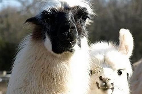 Causses et Lamas 5 ©