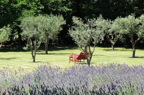 Domaine de Fos - oliveraie © Domaine de Fos