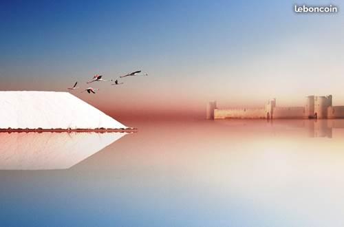 Salins d'Aigues-Mortes avec en fond la forteresse ©