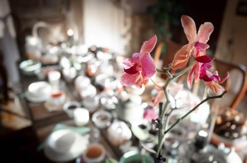 salle à manger-la vieille maison, Durfort et St Martin-photo aspheries ©